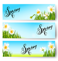 spring nature background daffodil flowers vector image