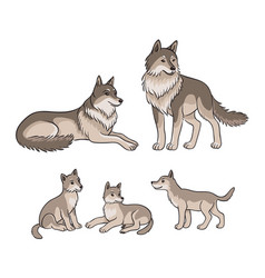 wolves family - parents and three cubs vector image
