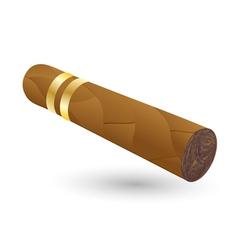 Cigar on white vector