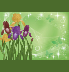Flowers iris and butterflies silhouettes vector