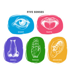 icons set five human senses in engraved style vector image