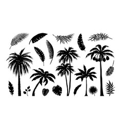 palm silhouette exotic jungle foliage tropical vector image
