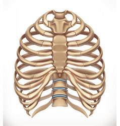 Rib cage human skeleton medicine 3d icon vector