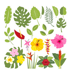 set of tropical flowers and leaves vector image