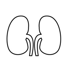 human organ kidneys icon vector image