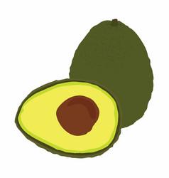 big avocado isolated on white background vector image