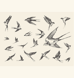 Flock birds flying swallows drawn sketch vector