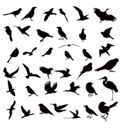 collection bird silhouettes vector image