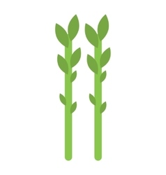 Fresh green asparagus on white vector image