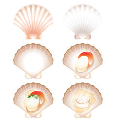 Set of fresh and cook scallop vector