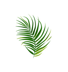 Single isolated palm leaf bright vector