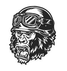 vintage ferocious gorilla biker head vector image