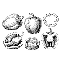 Pepper hand drawn set Vegetable engraved vector