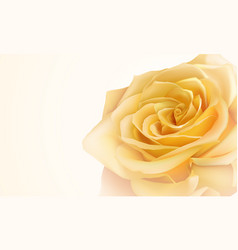 Realistic yellow rose vector