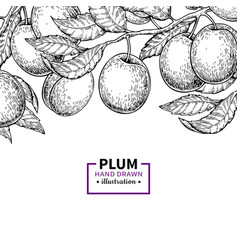 plum branch vintage border hand drawn isolate vector image