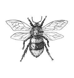 bumblebee insect bug beetle and bees many species vector image
