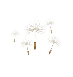 floating dandelion seed realistic isolated vector image