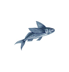 Flying Fish Drawing vector image