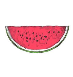 Ripe watermelon slice hand drawn isolated icon vector