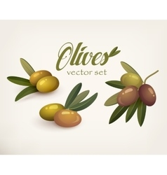 set olive branches with stems and leaves vector image