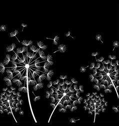 black background with stylized white dandelion vector image vector image