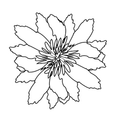 Silhouette petals of flower with sepal vector