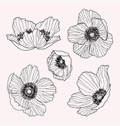 Anemone flower drawing set isolated wild vector
