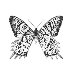 butterfly or wild insects chrysiridia rhipheus or vector image