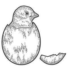 Chicken hatched from egg sketch scratch board vector