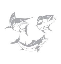 Marlin tuna mackerel vector
