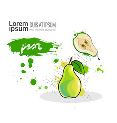 Pear hand drawn watercolor fruit on white vector
