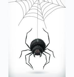 spider happy halloween 3d icon vector image
