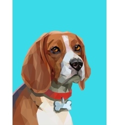 Low poly portrait of beagle dog vector image