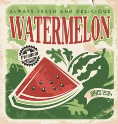 Vintage poster template for watermelon farm vector image