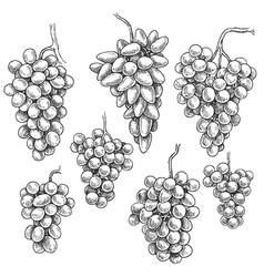hand drawn grape bunch variety set vector image
