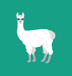 Llama in cateye glasses vector