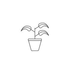 plant in jar icon vector image
