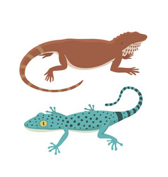 different kind of lizard reptile isolated vector image