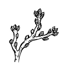 painted branch of a tree with a kidney vector image vector image