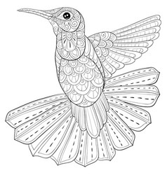 Adult coloring bookpage a cute hummingbird with vector