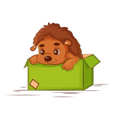 little hedgehog in a box vector image