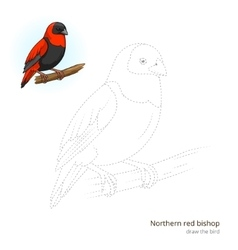Northern red bishop bird learn to draw vector