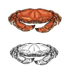 crab sea animal and ocean shellfish seafood vector image