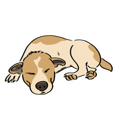 dog sleep vector image