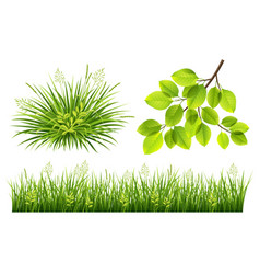 Summer grass and leaves vector