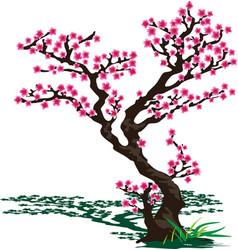japanese sakura vector image vector image