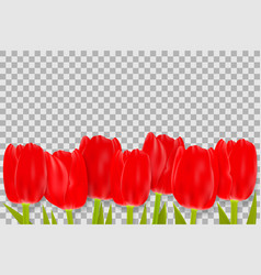 Bouquet of red tulips with space for greeting vector