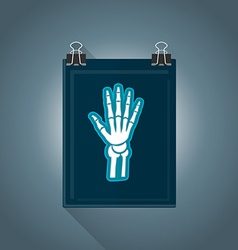 Flat radiography icon vector