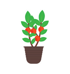 fruit tree in a pot vector image