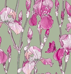 Seamless Floral Pattern with Pink Iris Flowers vector image